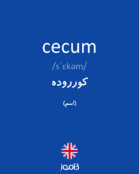 تصویر cecum - دیکشنری انگلیسی بیاموز