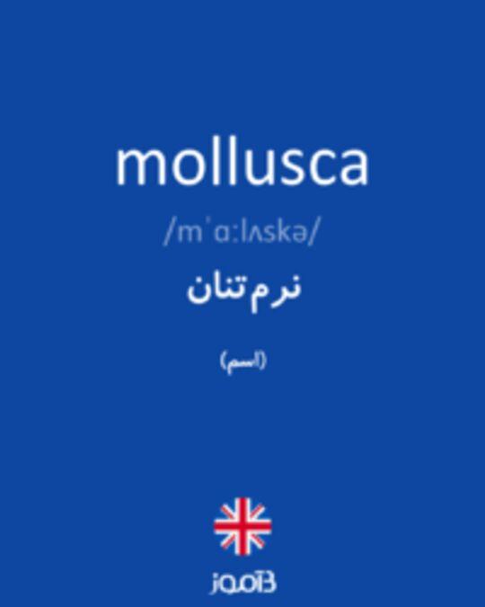 تصویر mollusca - دیکشنری انگلیسی بیاموز