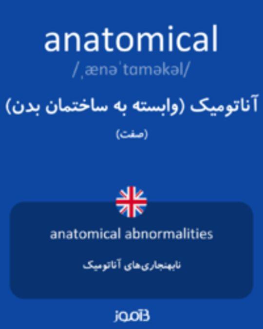 تصویر anatomical - دیکشنری انگلیسی بیاموز