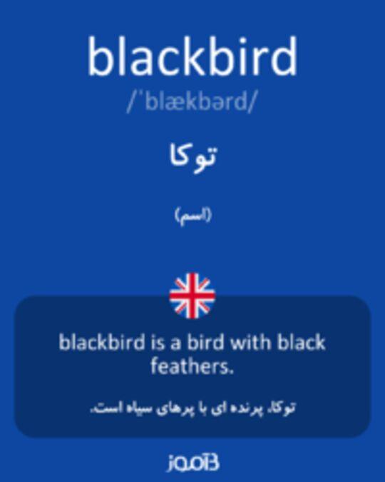 تصویر blackbird - دیکشنری انگلیسی بیاموز