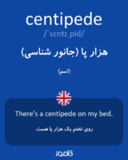 تصویر centipede - دیکشنری انگلیسی بیاموز