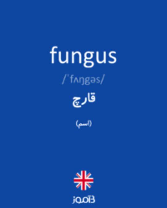 تصویر fungus - دیکشنری انگلیسی بیاموز