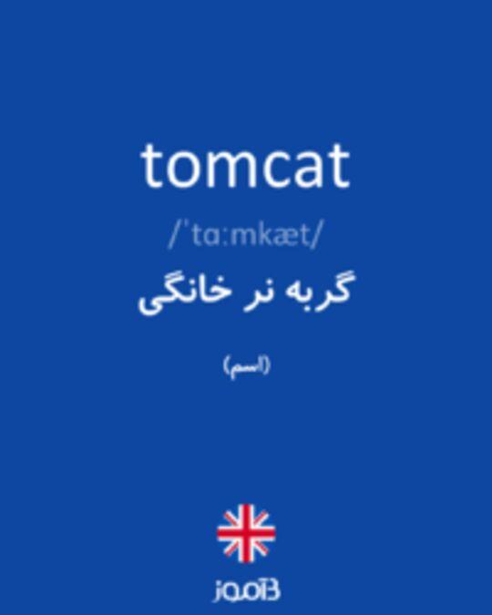تصویر tomcat - دیکشنری انگلیسی بیاموز
