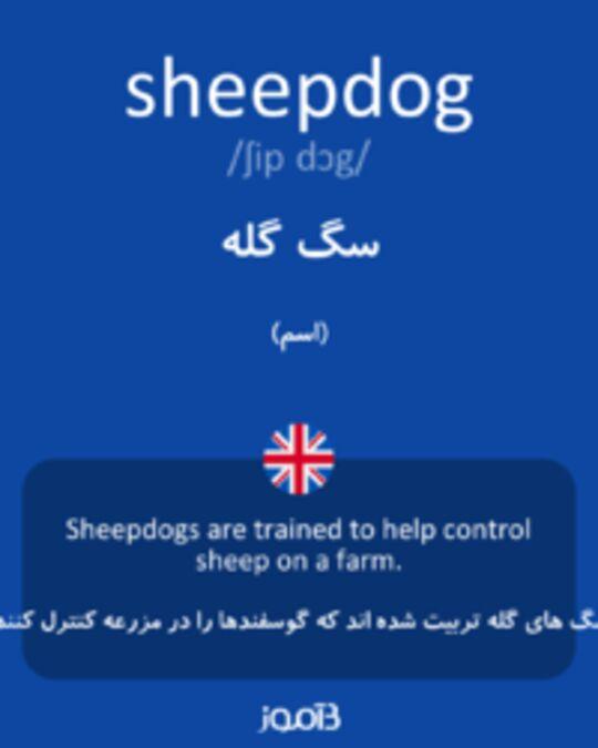 تصویر sheepdog - دیکشنری انگلیسی بیاموز