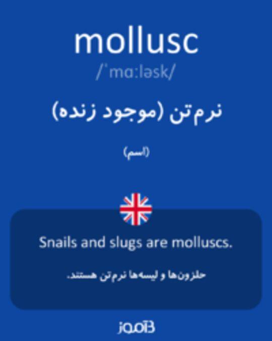 تصویر mollusc - دیکشنری انگلیسی بیاموز